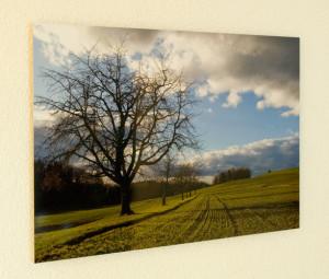 Foto auf Alu, Fine Art Print
